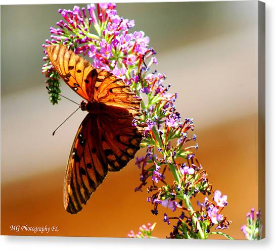 Hanging Butterfly Canvas Print