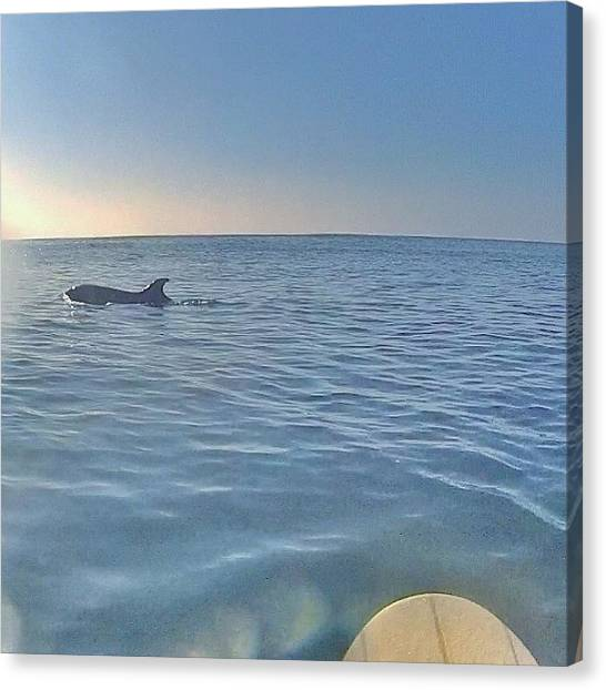 Dolphins Canvas Print - Hanging With The Locals by Dave Meszaros