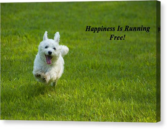 White Maltese Canvas Print - Happiness Is Running Free by Pat Exum