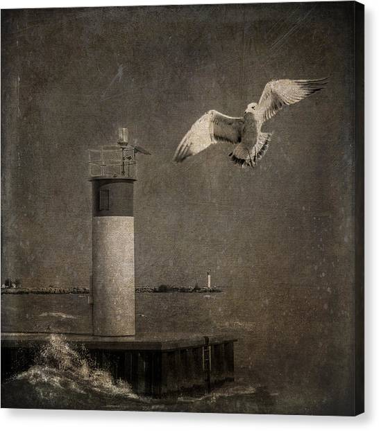 Happy And Free As A Seagull Canvas Print