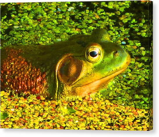Happy As A Frog In A Pond Canvas Print