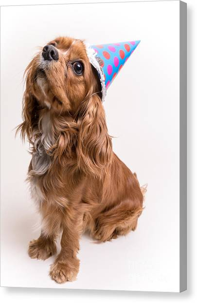 Happy Birthday Canvas Print - Happy Birthday Dog by Edward Fielding