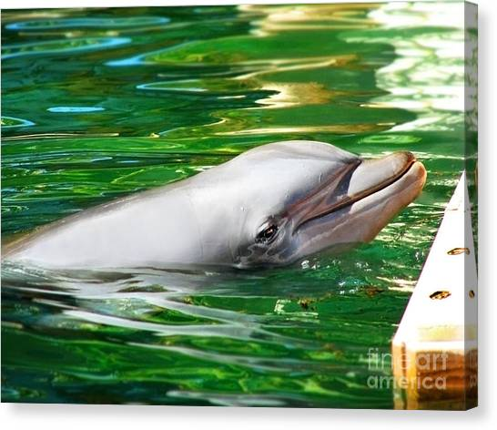 Bottlenose Dolphins Canvas Print - Happy Dolphin by Kristine Merc
