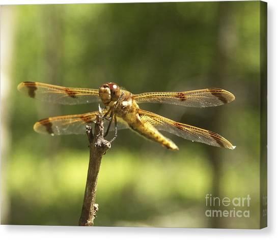 Happy Dragonfly Canvas Print