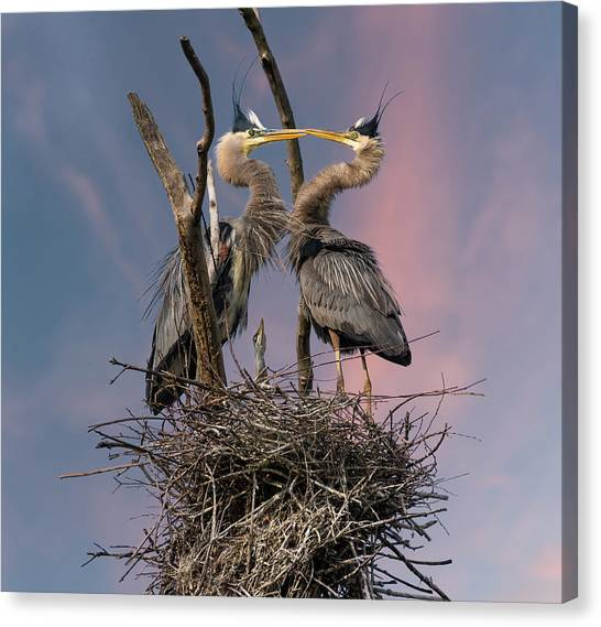 Heron Canvas Print - Happy Family Trio by Kevin Wang