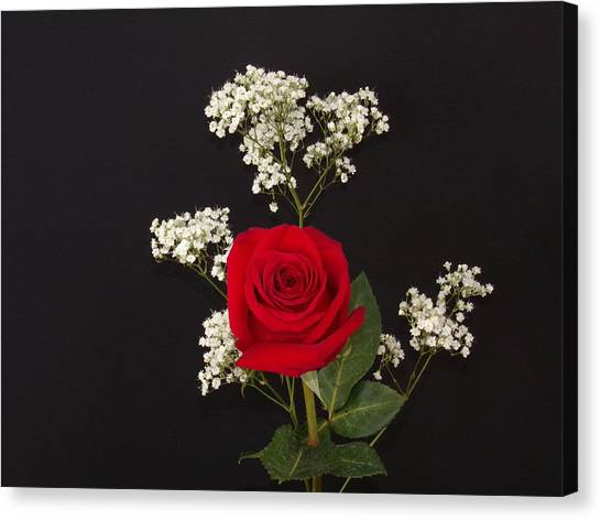 Happy Rose Canvas Print