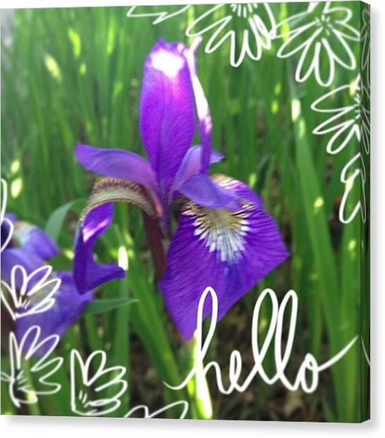 Irises Canvas Print - Happy Thursday! #abeautifulmess #flower by Teresa Mucha