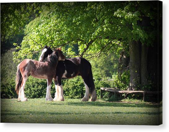 Happy Together Canvas Print by Stephen Norris