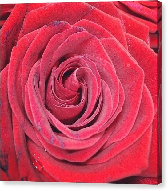Red Roses Canvas Print - Happy Valentine's Day by Gabriella Meszaros