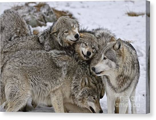 Happy Wolf Pack Canvas Print