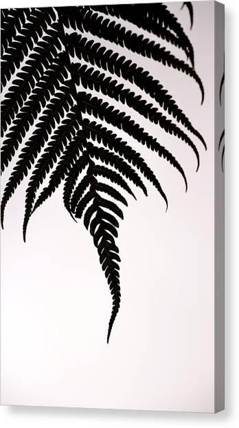 Hapu'u Frond Leaf Silhouette Canvas Print