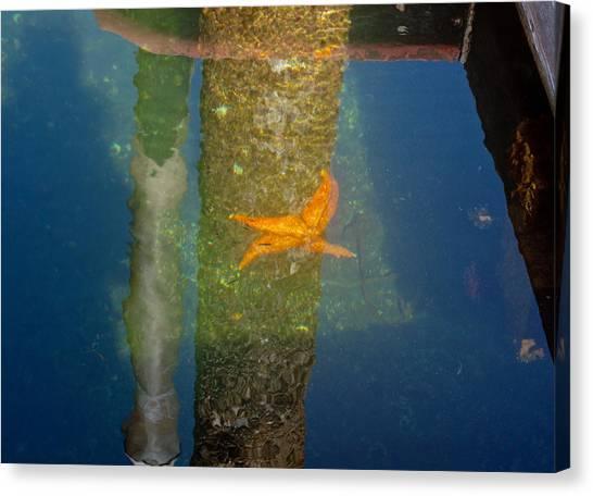 Harbor Star Fish Canvas Print