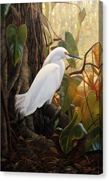 Egret Canvas Print - Hard To Hide by Tim Davis