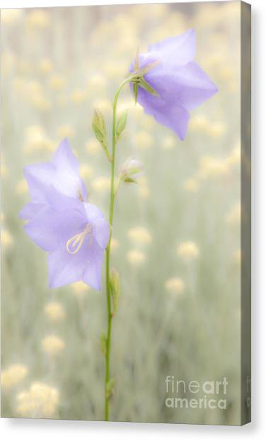Harebell Canvas Print