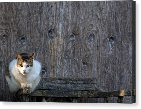 Canvas Print featuring the photograph Harlequin Rustic by Chriss Pagani