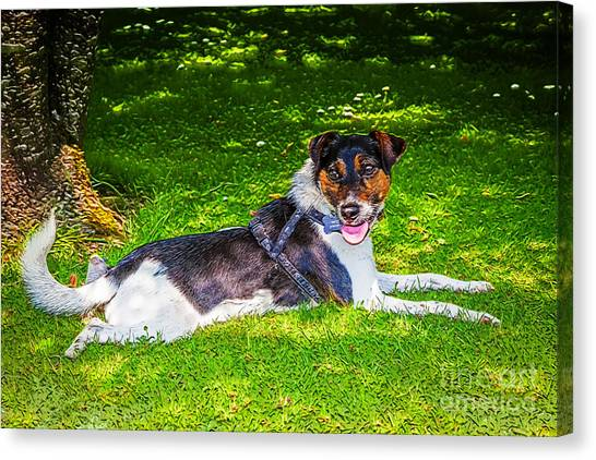 Harley Resting In Dappled Shade Canvas Print