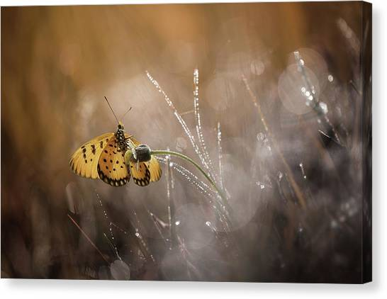 Bug Canvas Print - Harmony by Ahmad Baihaki