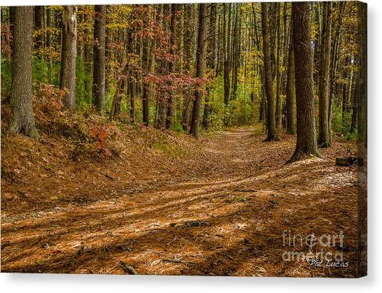 Forest Paths Canvas Print - Harold Parker State Forest Path by Pat Lucas