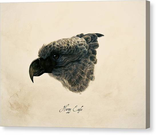 Harpy Eagle Canvas Print by Rachel Root