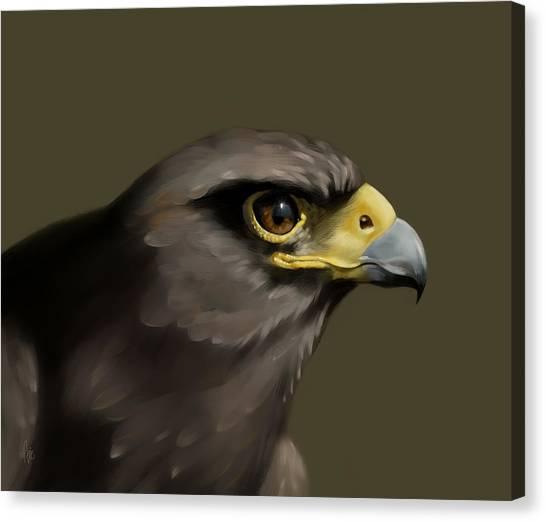 Harris Hawk Canvas Print