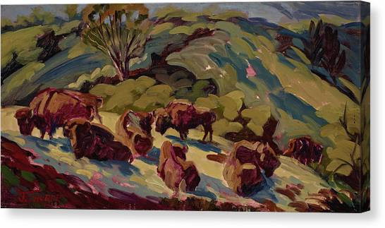 Hart Ranch Buffalo Canvas Print