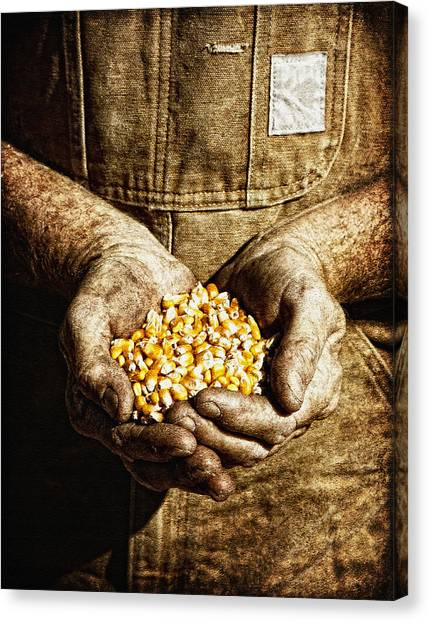 Harvest In His Hands Canvas Print