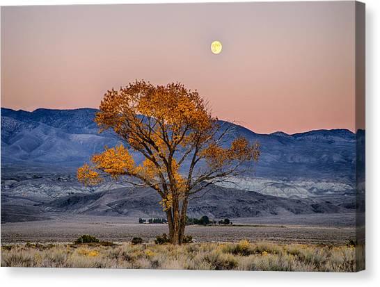 Moonlit Canvas Print - Harvest Moon by Cat Connor
