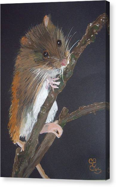 Harvest Mouse Canvas Print