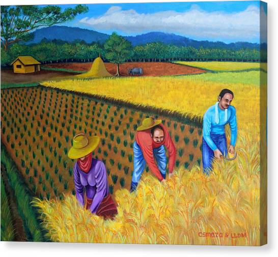 Harvest Season Canvas Print