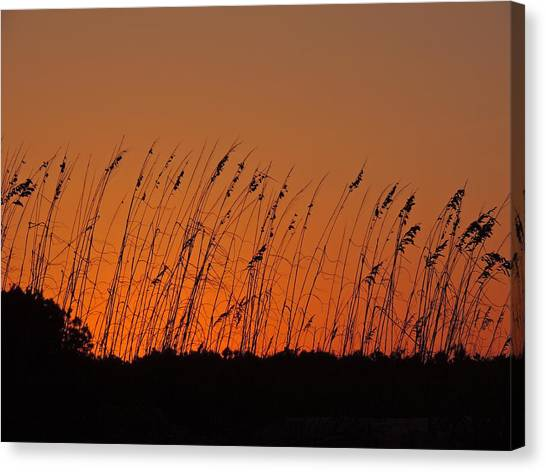 Harvest Sky And Sea Oats Canvas Print