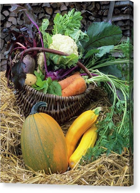 Cauliflower Canvas Print - Harvested Vegetables by Bjorn Svensson/science Photo Library