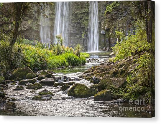 Cabbage Canvas Print - Hatea River And Whangarei Falls New Zealand by Colin and Linda McKie