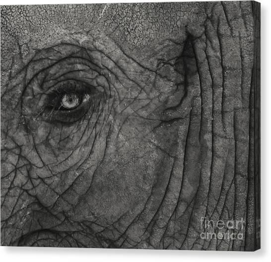 Haunting Eye Canvas Print