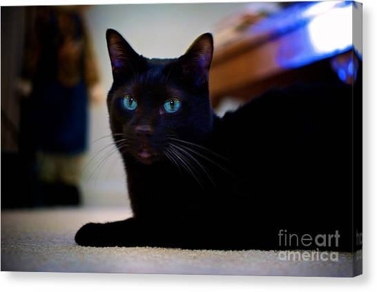 Havana Brown Cat Canvas Print
