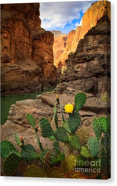 Colorado River Canvas Print - Havasu Cactus by Inge Johnsson