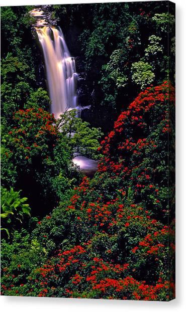 Hawaiian Waterfall With Tulip Trees Canvas Print