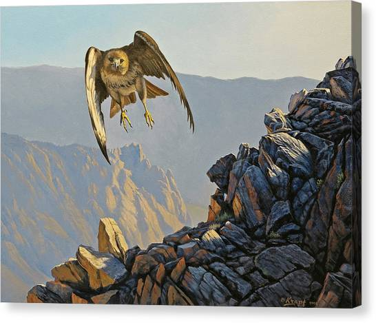 Hawks Canvas Print - Hawk Above Beartooth Pass by Paul Krapf