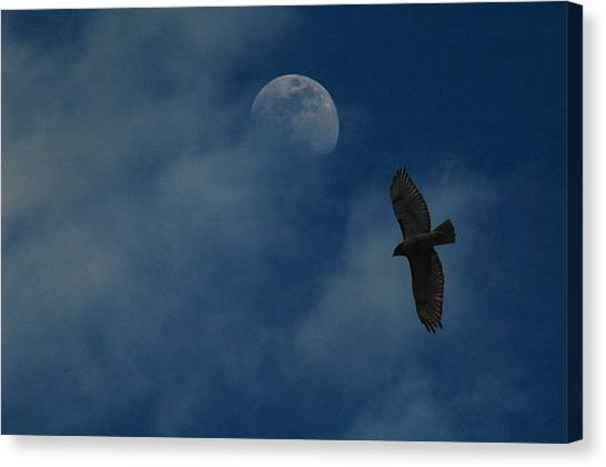 Hawk And Moon Coming Out Of The Mist Canvas Print