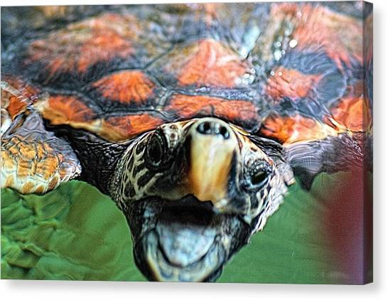 Canvas Print featuring the photograph Hawk Billed Turtle by David Rich