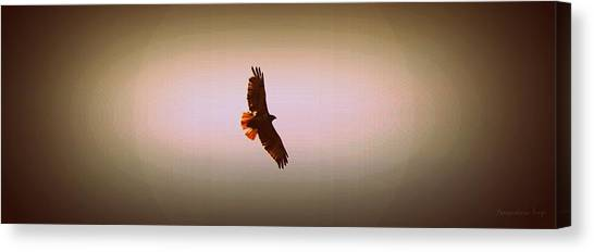Hawk Eyes II Canvas Print by Augustina Trejo