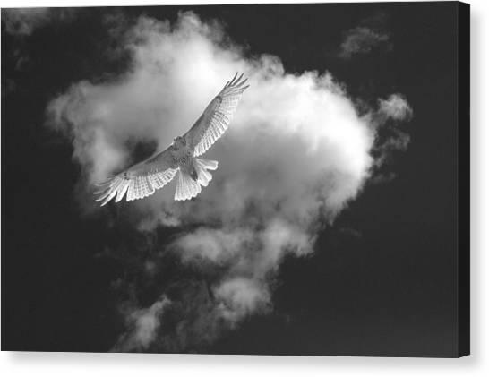 Hawk In Flight - Bw Canvas Print