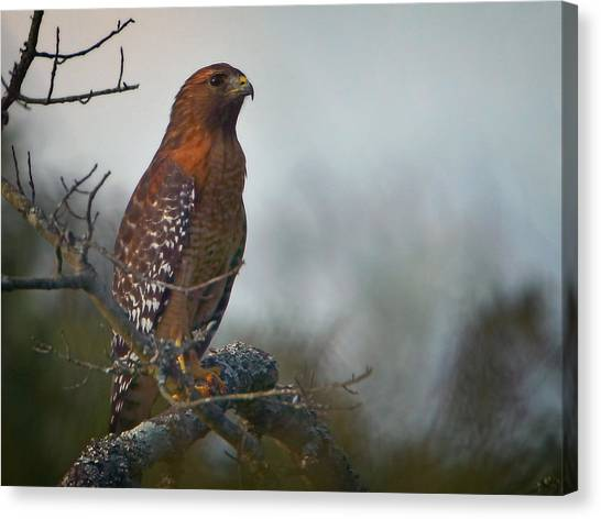 Hawk In The Mist Canvas Print