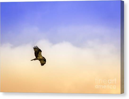 Osprey Canvas Print - Hawk Over Head by Marvin Spates