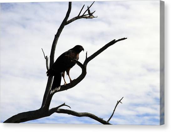 Hawk Silhouette 2 Canvas Print
