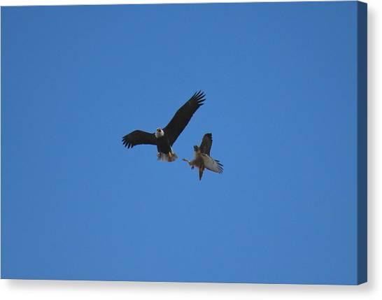 Hawk Vs Eagle Canvas Print