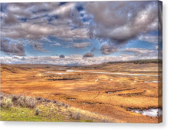 Hayden Valley Bison On Yellowstone River Canvas Print