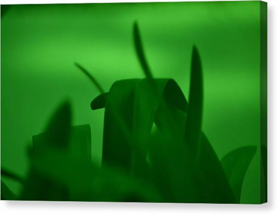 Haze Of Green Canvas Print by Kiros Berhane