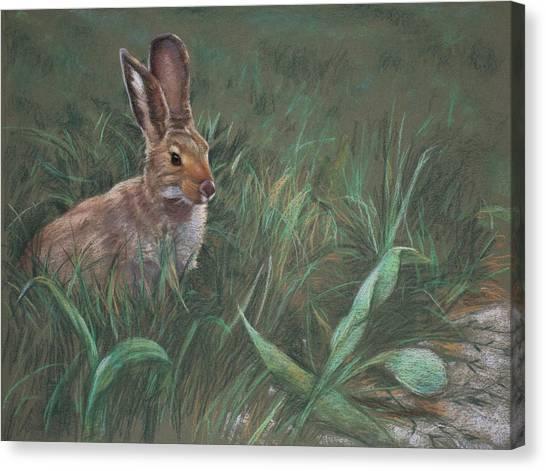 Rabbit Canvas Print - Hazel by Christopher Reid