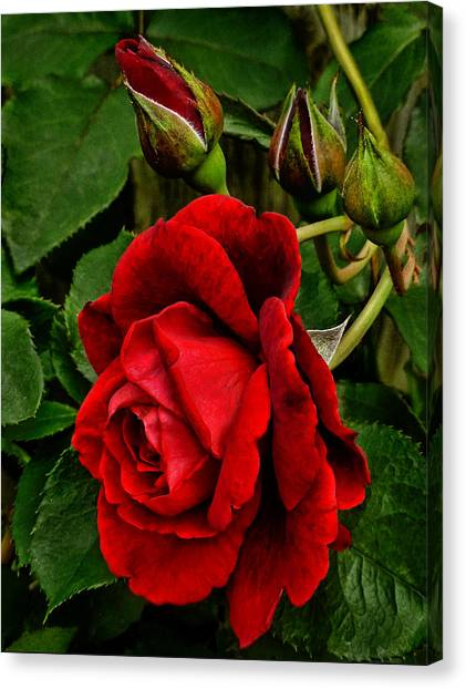 Hdr Rose Canvas Print