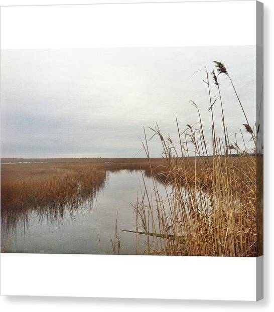 Seagrass Canvas Print - he Is Richest Who Is Content With The by Josh Kinney